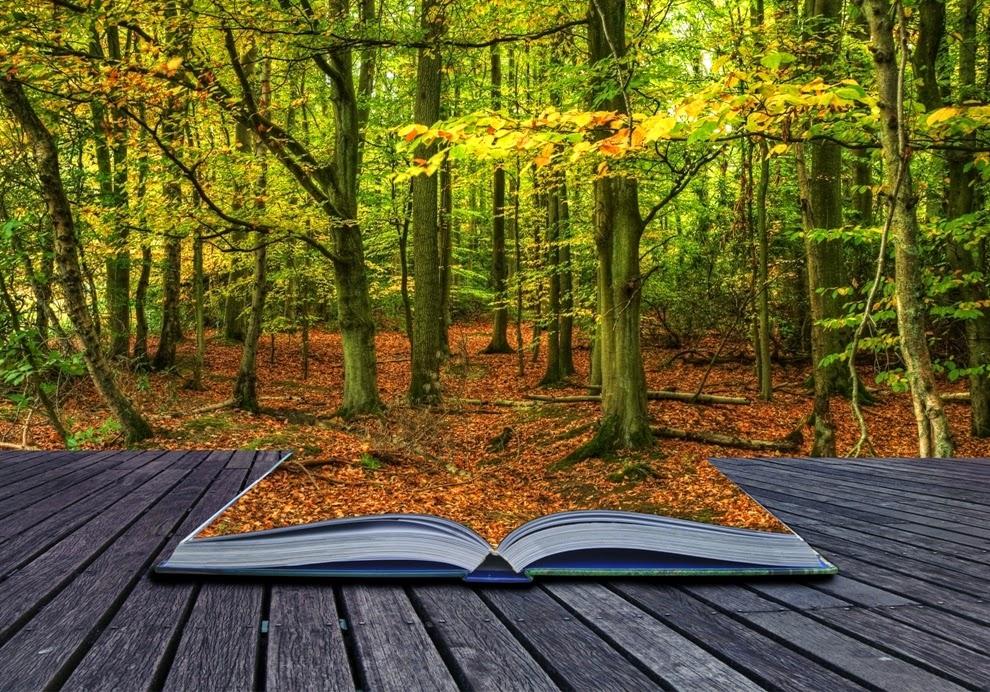 ¿Cómo sobrevivir en la selva de Amazon  conseguir lectores y vender libros?